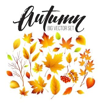 Folhas de outono coloridas em branco