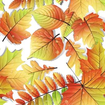 Folhas de outono coloridas sem emenda, isoladas no fundo branco.