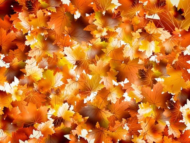 Folhas de outono coloridas.