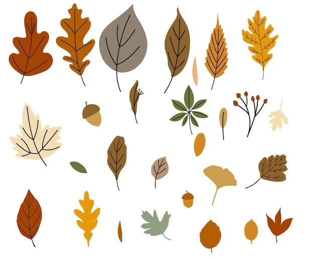 Folhas de outono com excelente design para qualquer finalidade