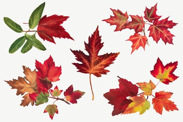 Folhas de outono com ilustração botânica, remixada das obras de mary vaux walcott