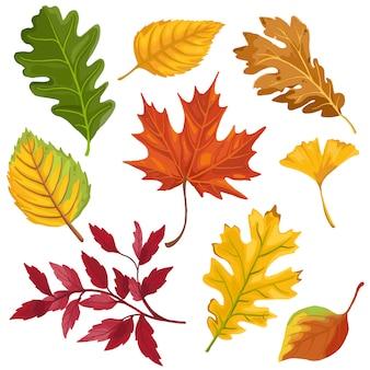 Folhas de outono cor isolar no fundo branco
