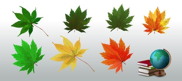 Folhas de outono de vetor realista. conjunto de ícones de outono. coleção de vetores de símbolo da natureza isolada no branco