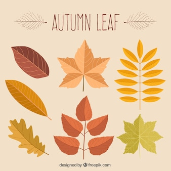 Folhas de outono desenhado mão bonito