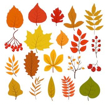Folhas de outono douradas e vermelhas, brunches e bagas.