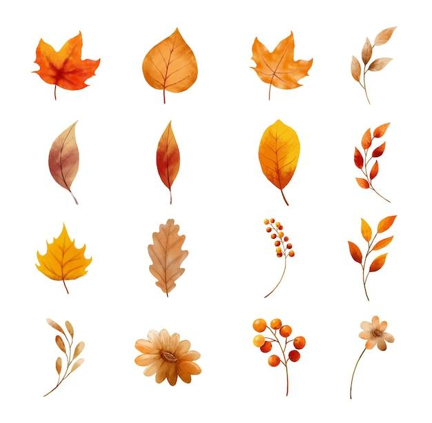 Folhas de outono e conjunto de flores isolado no fundo branco. folha com estilo aquarela.