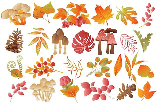 Folhas de outono e plantas isoladas definir vários tipos de cogumelos, bagas e colorido caído