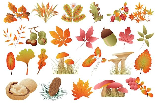 Folhas de outono e plantas isoladas em conjunto com folhas caídas de cores diferentes, nozes, nozes, castanhas