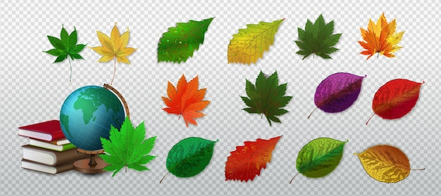 Folhas de outono, elementos maravilhosos para o seu design. folhas de outono de choupo, faia ou olmo e álamo tremedor para design de cartão de natal sazonal Vetor Premium