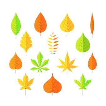 Folhas de outono em estilo cartoon de fundo branco isolado