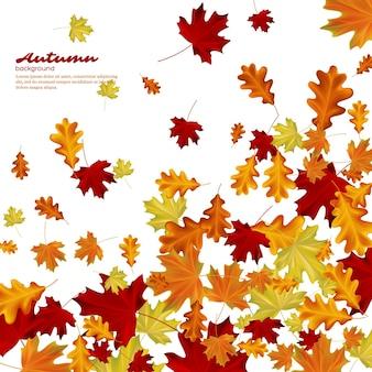 Folhas de outono em fundo branco. ilustração outonal do vetor.