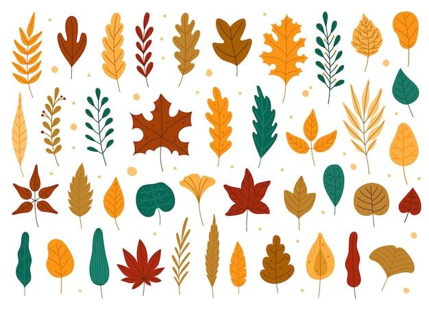 Folhas de outono folha caída do olmo de bordo de carvalho desenhado à mão outono floresta conjunto de folhagem amarela ou vermelha