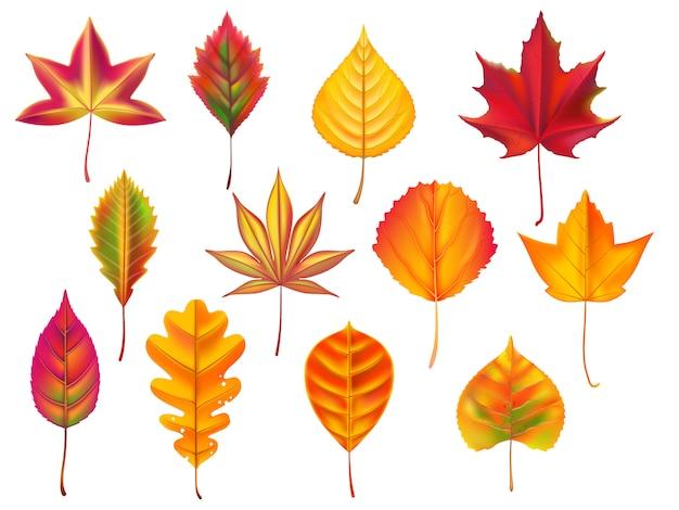 Folhas de outono folha caída, lixo de folhas secas de outono seco e natureza outubro caindo deixa conjunto