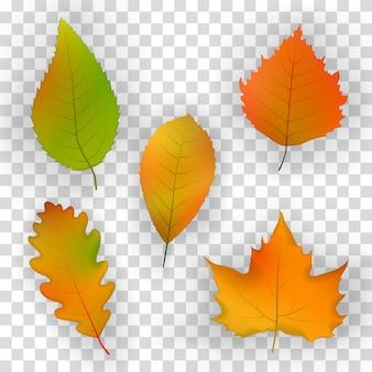 Folhas de outono no fundo de uma parede de madeira.
