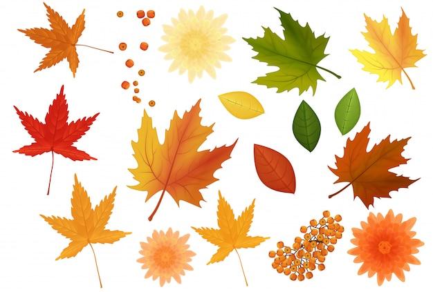 Folhas de outono realistas e conjunto de flores