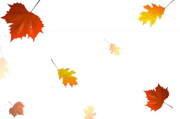 Folhas de outono voando