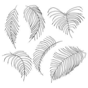 Folhas de palmeira de vetor, conjunto de folha de selva isolado no fundo branco