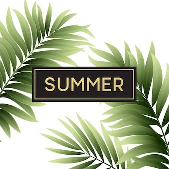 Folhas de palmeira tropical com texto de verão