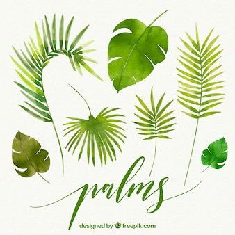 Folhas de palmeiras aquarela
