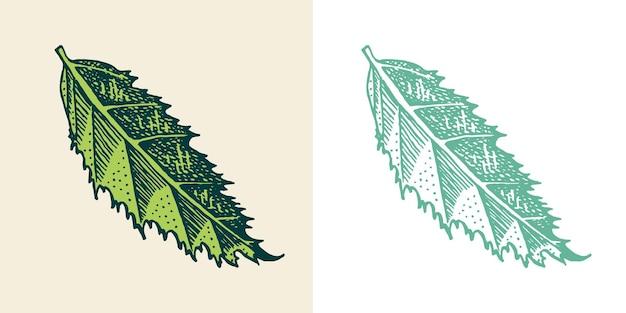 Folhas de plantas com flores tropicais ou exóticas e folhas palm plant monstera vintage samambaia gravada