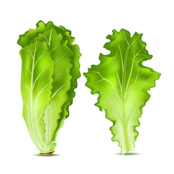 Folhas de salada de alface realista
