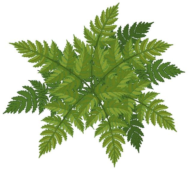 Folhas de samambaia com estilo cartoon isolado