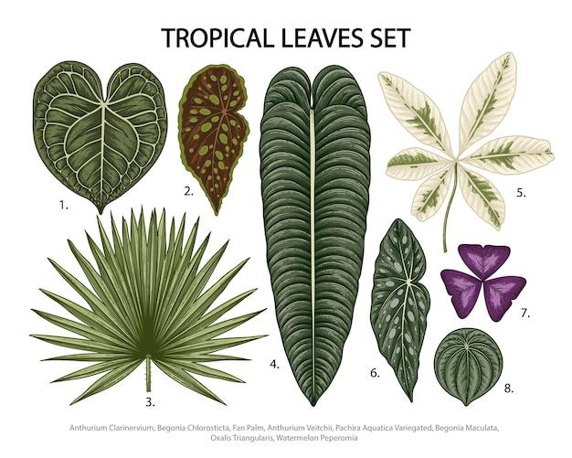 Folhas definidas ilustração botânica, planta exótica tropical, folhagem da selva em branco.