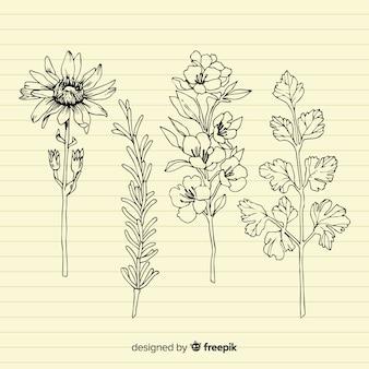 Folhas e flores desenhadas mão realista