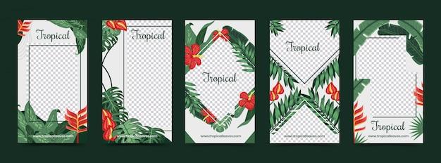 Folhas e flores tropicais como modelo de histórias do instagram