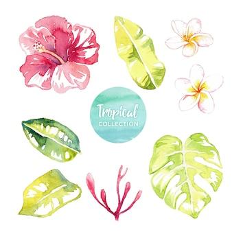 Folhas e flores tropicais em aquarela