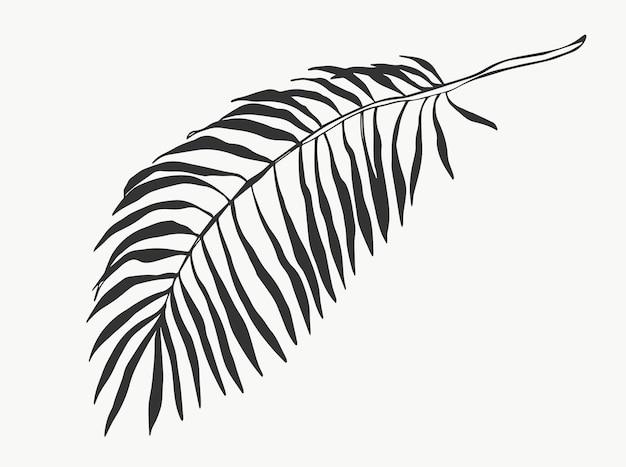 Folhas e folhagem de linha de palmeiras tropicais isoladas em ilustrações vetoriais de fundo branco