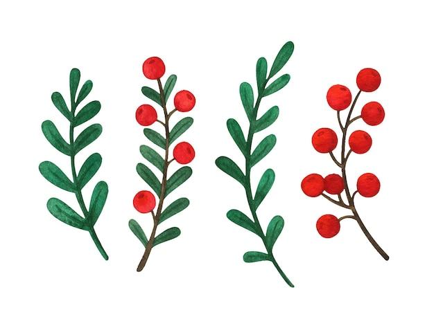 Folhas e frutos vermelhos no galho. um conjunto de ilustrações em aquarela de plantas de natal. elementos botânicos para cartões postais, gravuras, clipart natural
