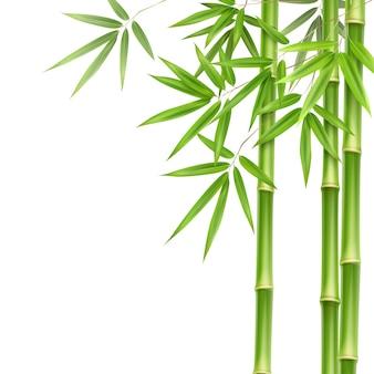 Folhas e hastes de bambu verdes isoladas em um fundo branco com espaço de cópia