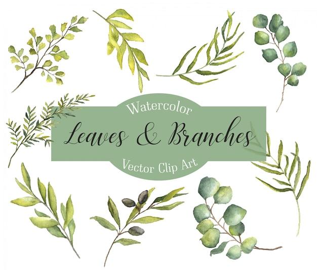 Folhas e ramos de aquarela