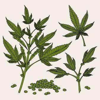 Folhas e sementes botânicas de cannabis