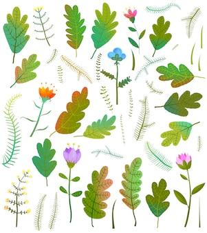 Folhas folhagem flores floresta coleção
