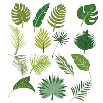 Folhas frescas botânicas no conjunto tropical design