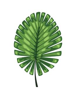 Folhas isoladas verdes abstratas tropicais.