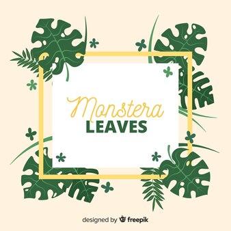 Folhas planas de monstera