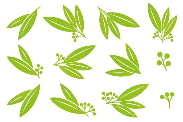 Folhas planas verdes de vetor com bagas para logotipo de comida saudável de produtos bio eco ou medicamentos