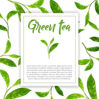 Folhas realistas de chá verde