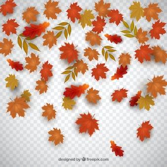 Folhas secas de outono