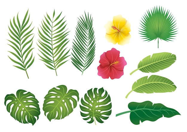 Folhas tropicais com ilustração plana