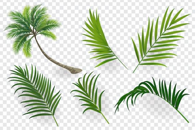 Folhas tropicais conjunto isoladas
