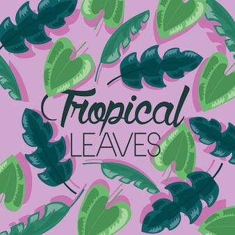 Folhas tropicais de quadro