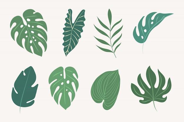 Folhas tropicais de vetor. elementos botânicos