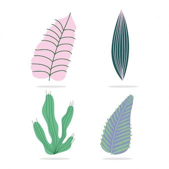 Folhas tropicais diferentes folhagem natureza botancial ícones decorativos isolados