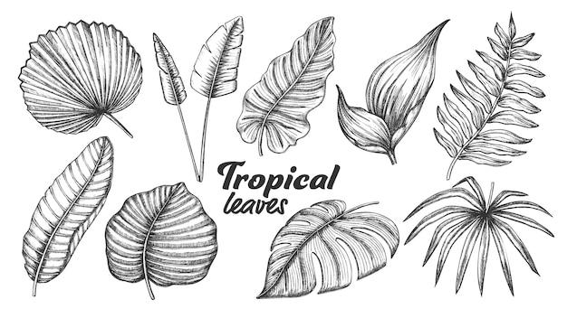 Folhas tropicais diferentes