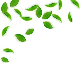 Folhas verdes caindo. folhas frescas de chá puro voando.