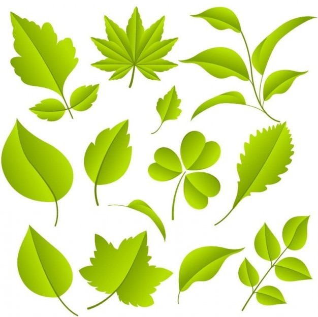 Folhas verdes conjunto gráfico vetorial